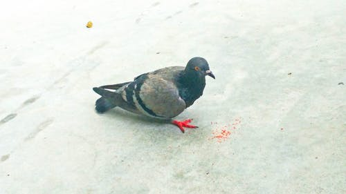 Free stock photo of bird seed, botanical gardens, city, eating bird