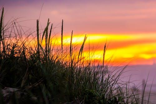 Kostenloses Stock Foto zu dämmerung, gras, makro, sonnenaufgang