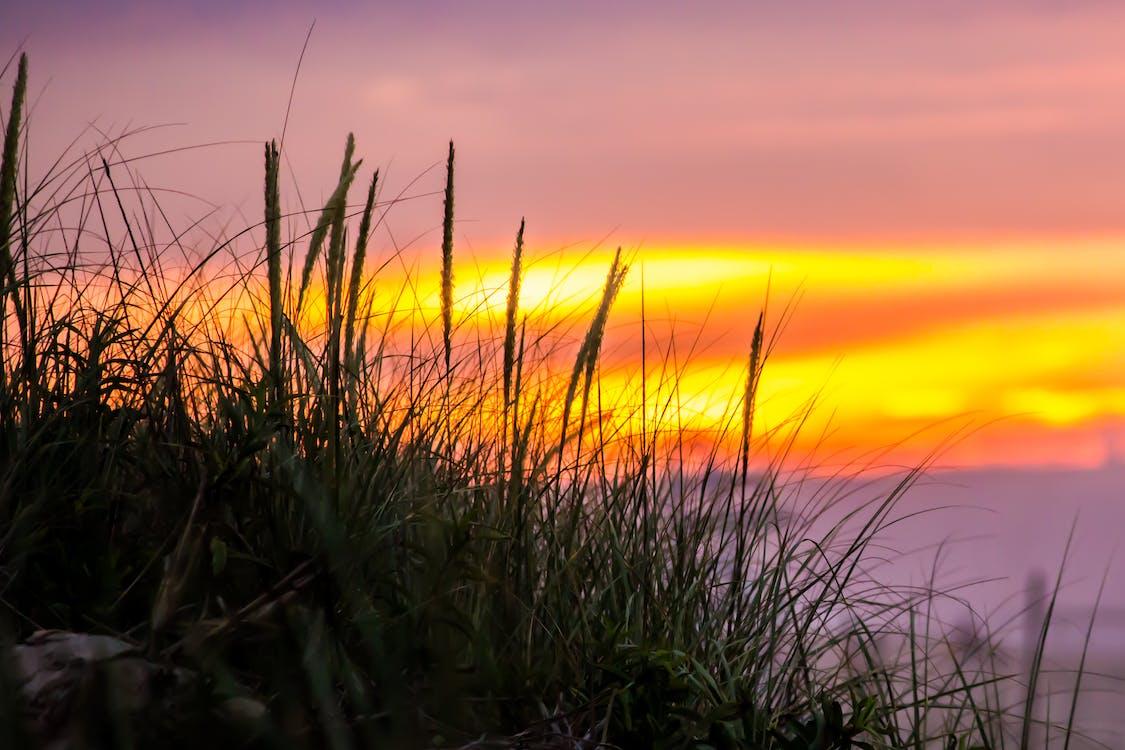 çim, çimen, gün batımı