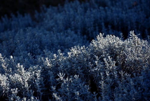 Darmowe zdjęcie z galerii z jasny, kolor, las, niebieski