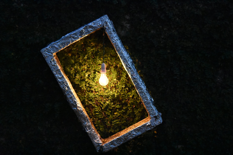 Light Bulb on Plant Box