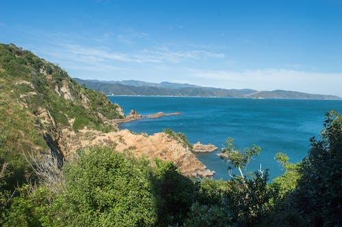 Free stock photo of greenery, landscape, matiu somes island, natural beauty