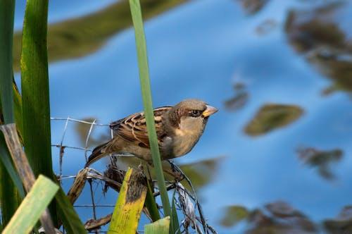 Free stock photo of botanic garden, botanical garden, new zealand, sparrow