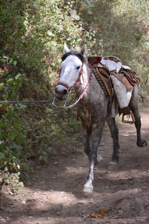 Ảnh lưu trữ miễn phí về bạch mã, con ngựa, cưỡi ngựa, đầu ngựa