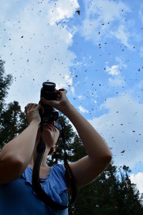 Ảnh lưu trữ miễn phí về bướm, bướm chúa, bướm trên hoa, chụp ảnh động vật