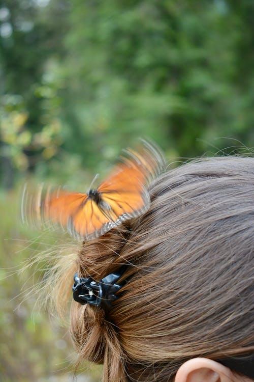 Ảnh lưu trữ miễn phí về bướm, bướm chúa, bướm trên hoa, Con bướm