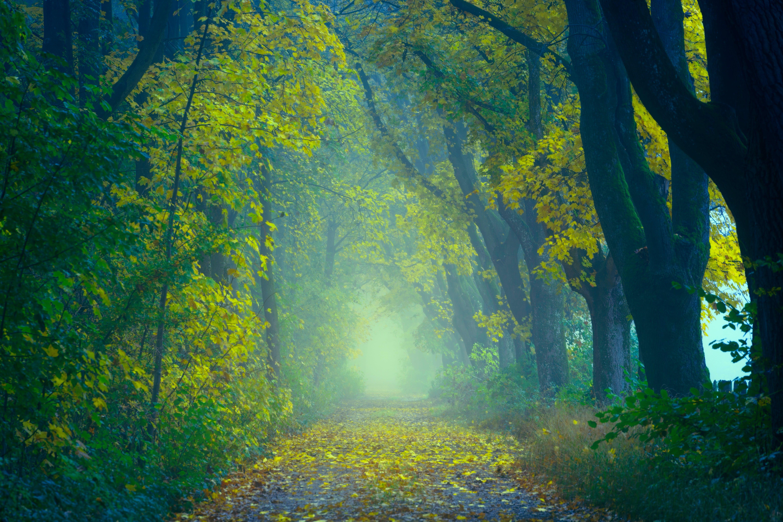 Kostenloses Stock Foto zu äste, bäume, baumstämme, farben