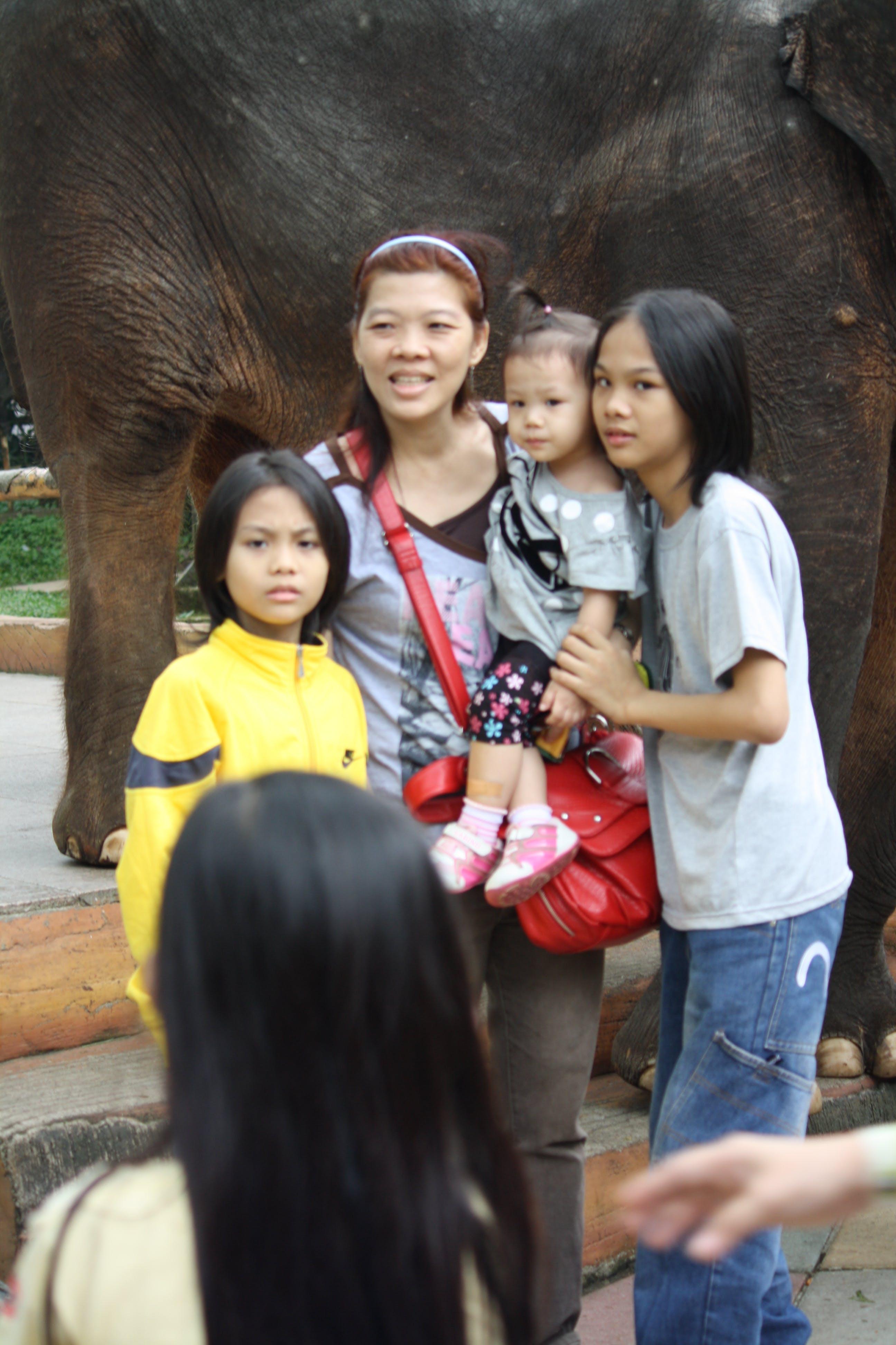 Foto d'estoc gratuïta de dones, elefant, nens