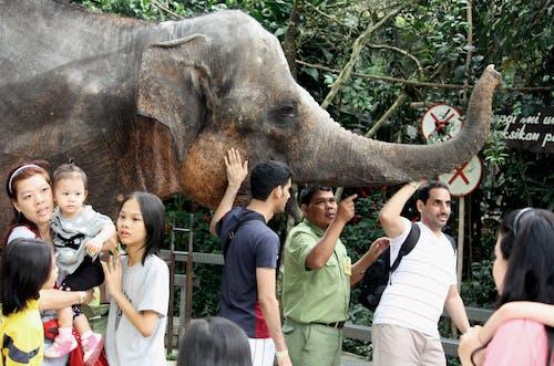 Kostenloses Stock Foto zu elefant, kinder, lehrer, menschen