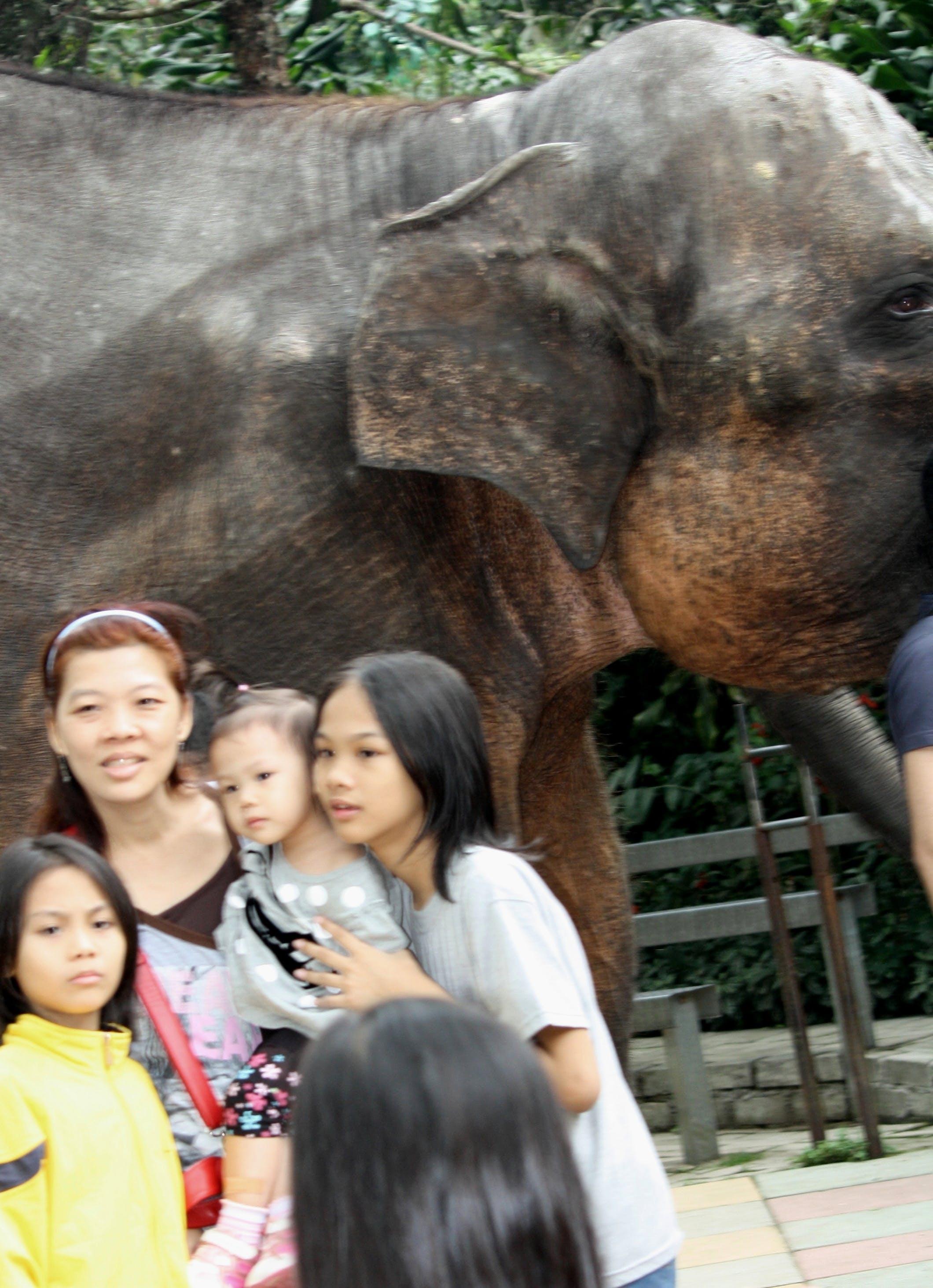 Foto d'estoc gratuïta de dones, elefant, gent, nens