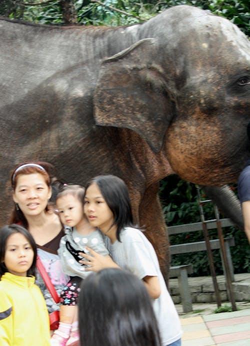 Kostenloses Stock Foto zu elefant, frauen, kinder, menschen