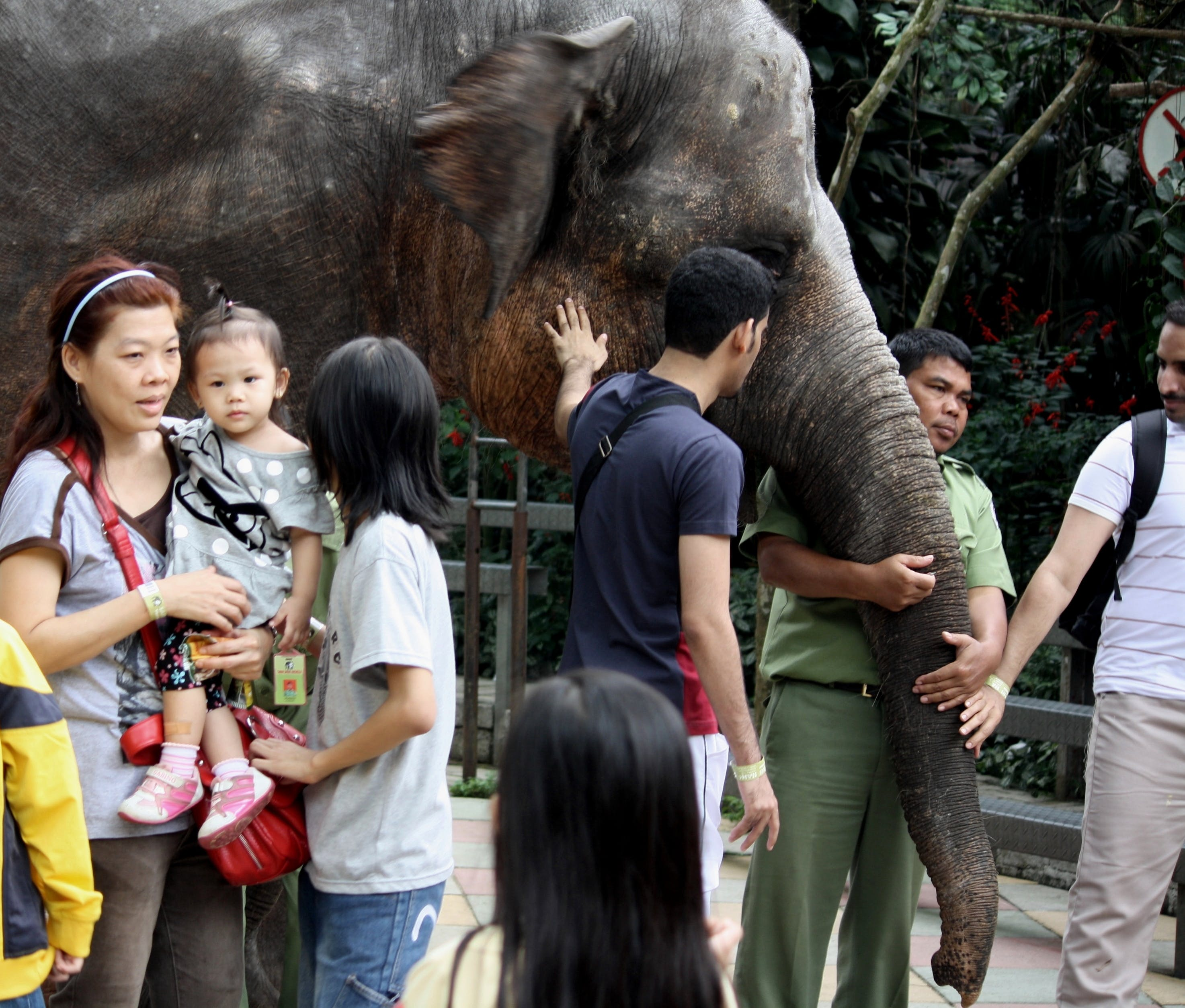 Free stock photo of children, elephant, instructor, kids