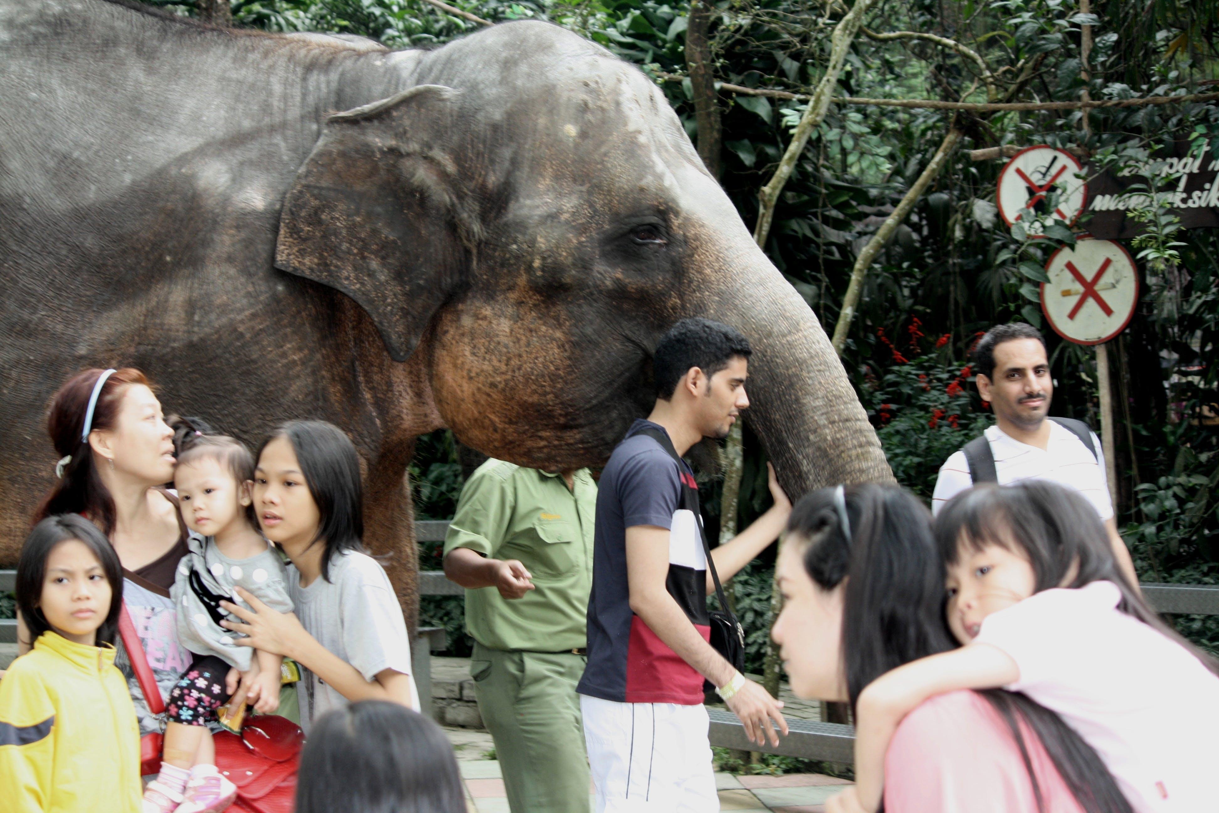 Foto d'estoc gratuïta de elefant, gent, nens