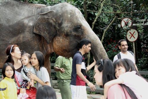 Kostenloses Stock Foto zu elefant, kinder, menschen