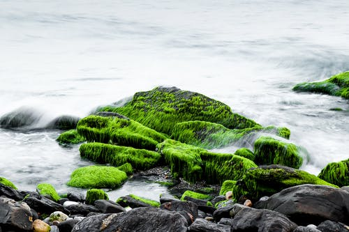 Sea Water Splash on Green and Black Rocks