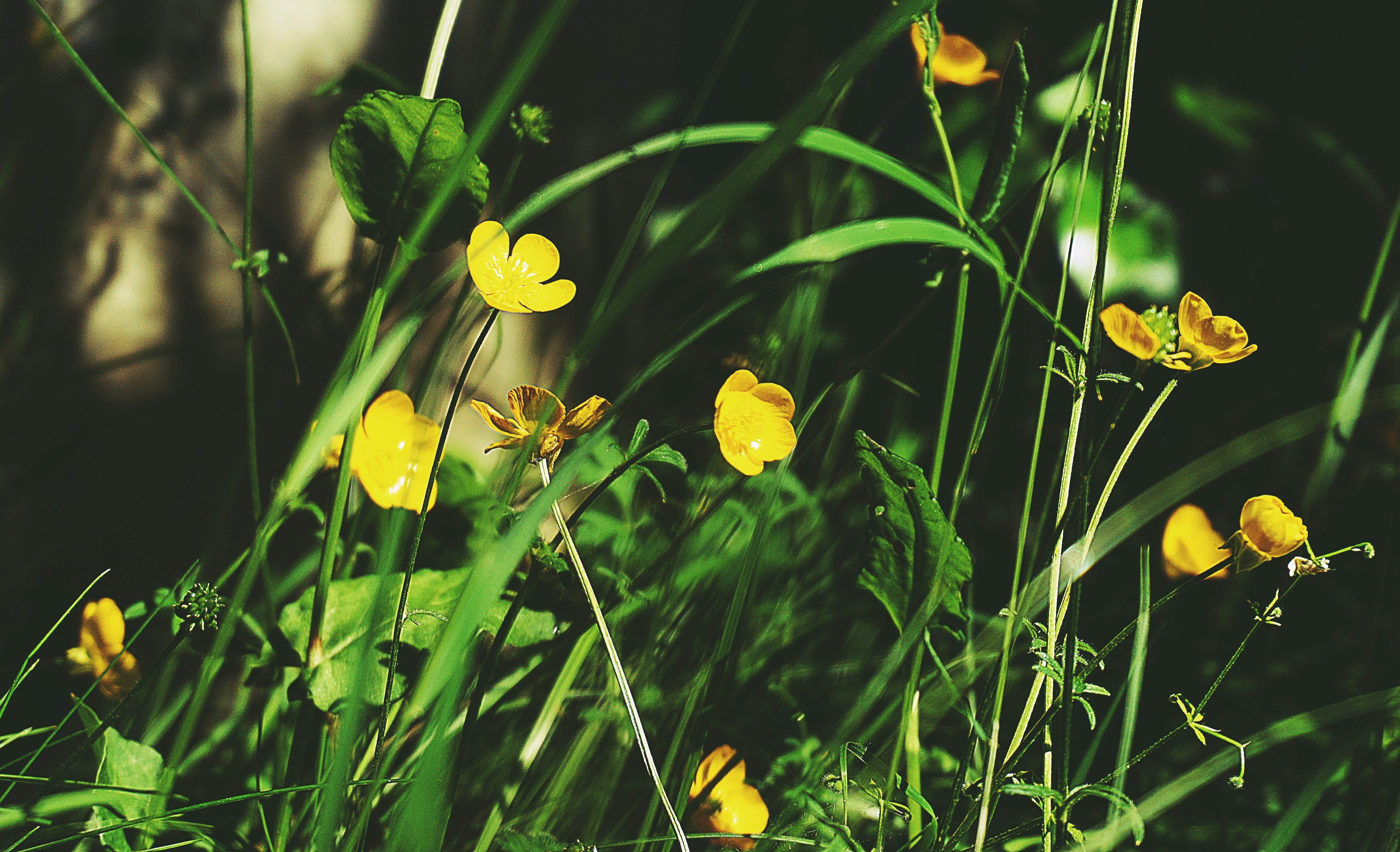 Selective Focus Photography of Yellow Petaled Flowers