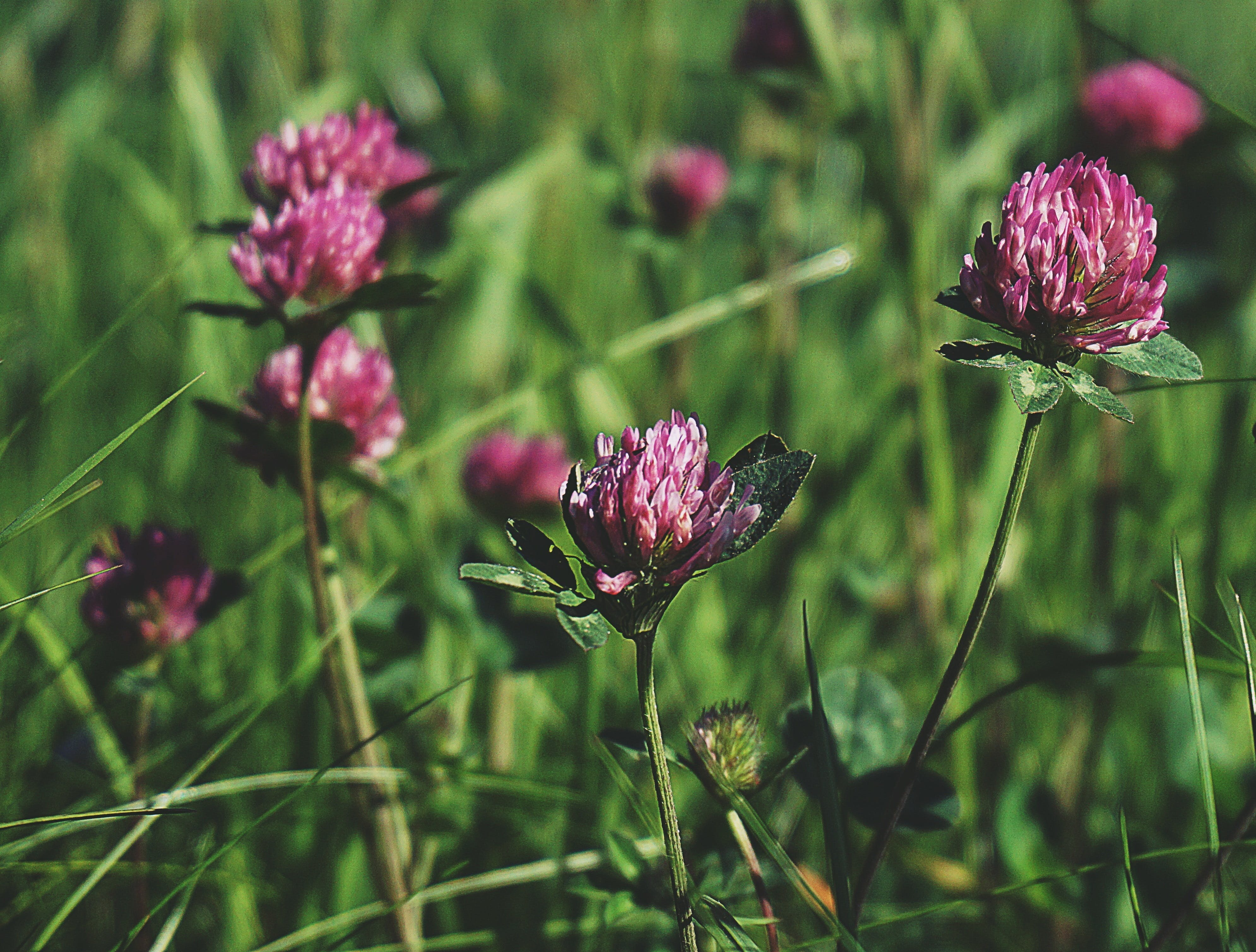 Free stock photo of nature, flowers, meadow, plants