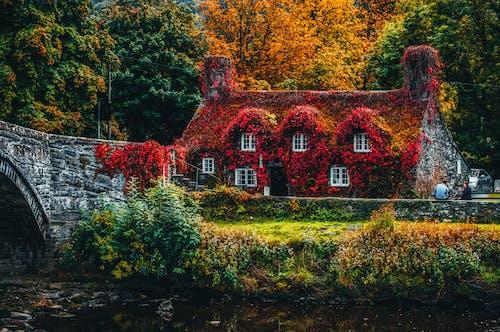 Casa Coperta Di Pianta Da Fiore Rossa