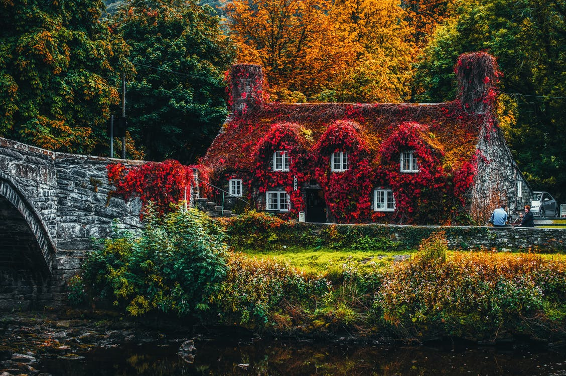 House Covered With Red Flowering Plant