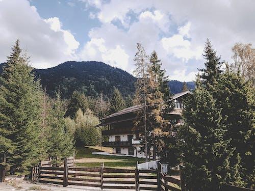 Imagine de stoc gratuită din arbori, arbori veșnic verzi, codru, concediu