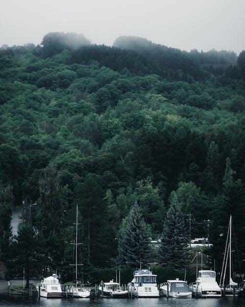 Gratis arkivbilde med båter, båthavn, dis, disig