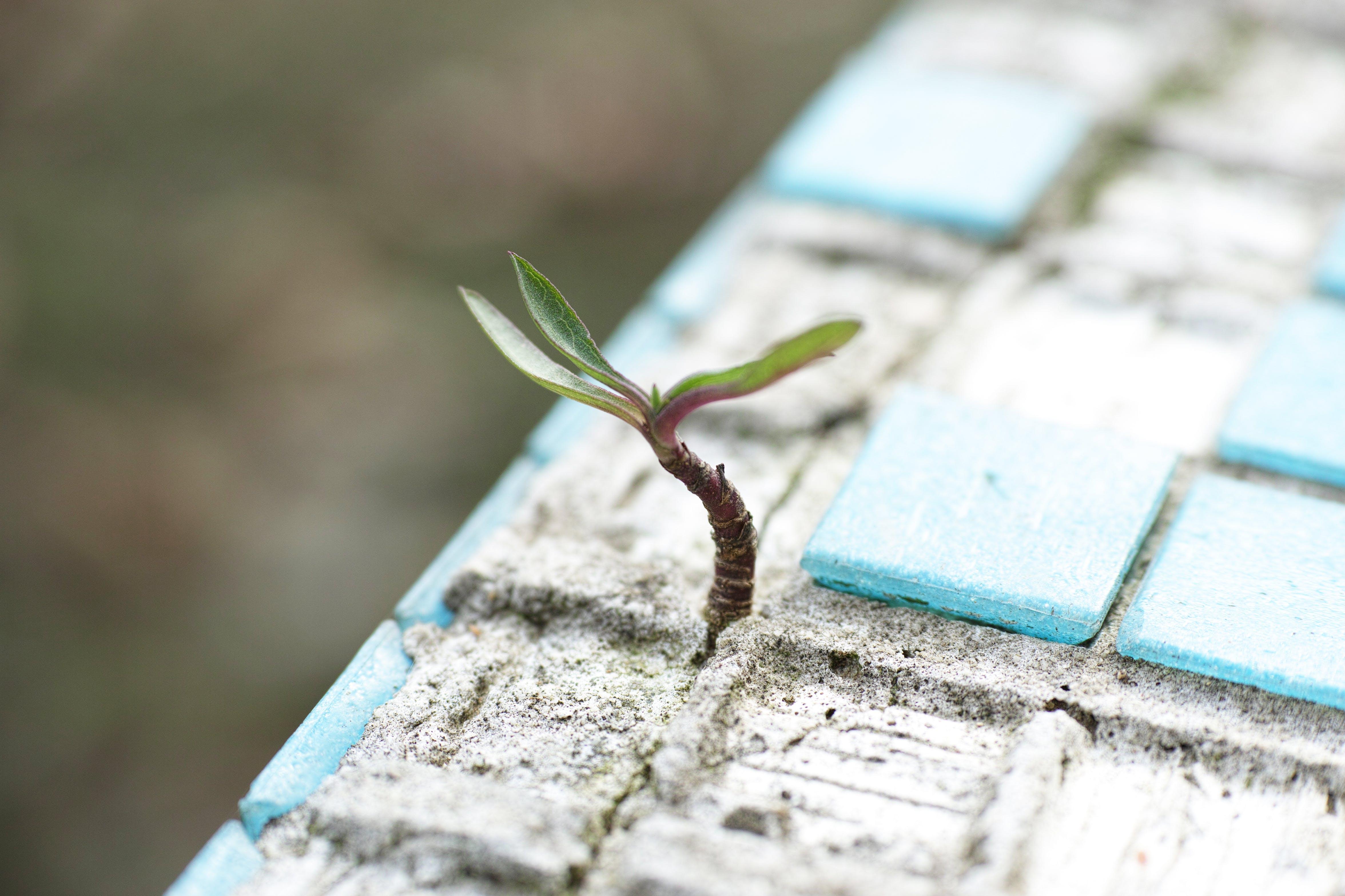 Darmowe zdjęcie z galerii z beton, cement, dachówka, drewno