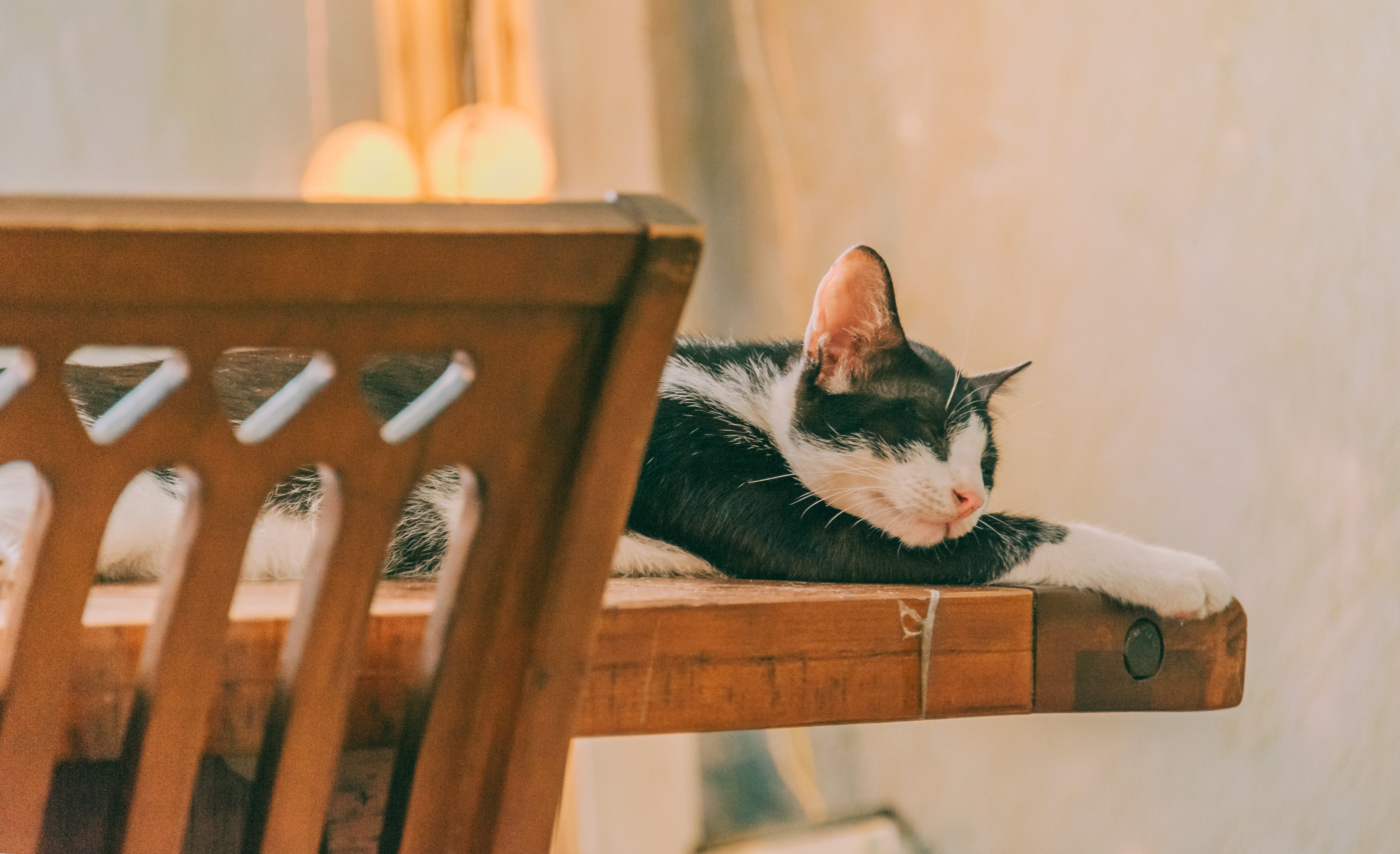 Cat Sleeping on the Table