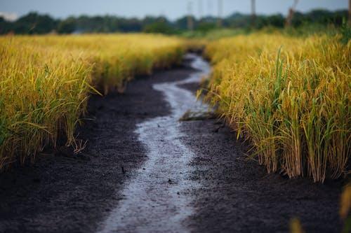 Základová fotografie zdarma na téma bahno, chodník, farma, hřiště