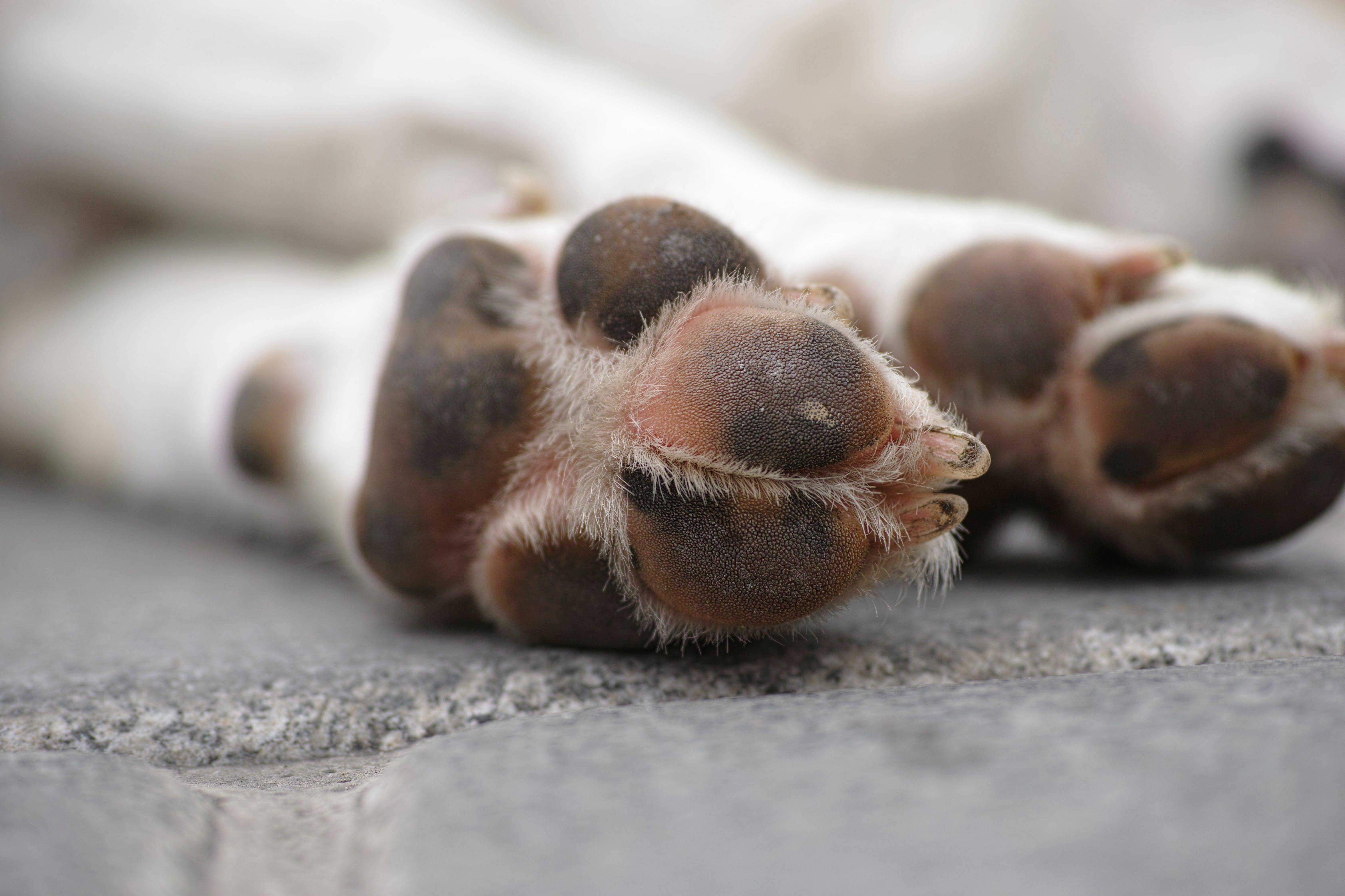 Shallow Focus Photography of White Dog's Paws