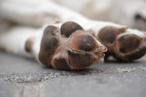 Foto stok gratis anak anjing, anjing, berfokus, berkonsentrasi