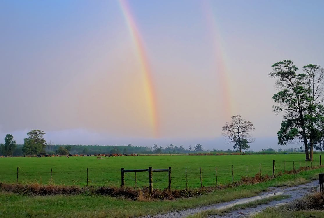 Rainbow Above the Green Grass Lawn