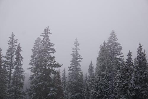 Free stock photo of adventure, cold, explore, fog