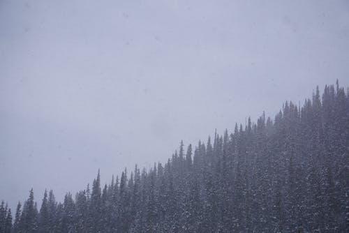 Free stock photo of adventure, explore, fog, foggy