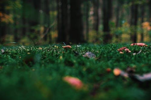 Foto d'estoc gratuïta de arbres, bosc, boscos, colors