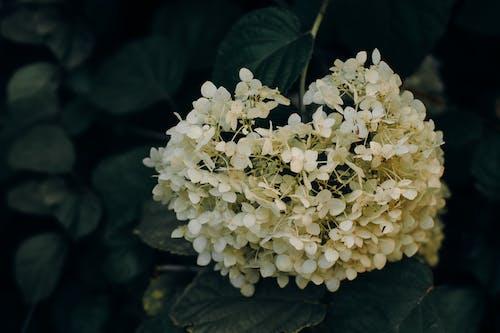 Photos gratuites de centrales, couleurs, fleurir, fleurs