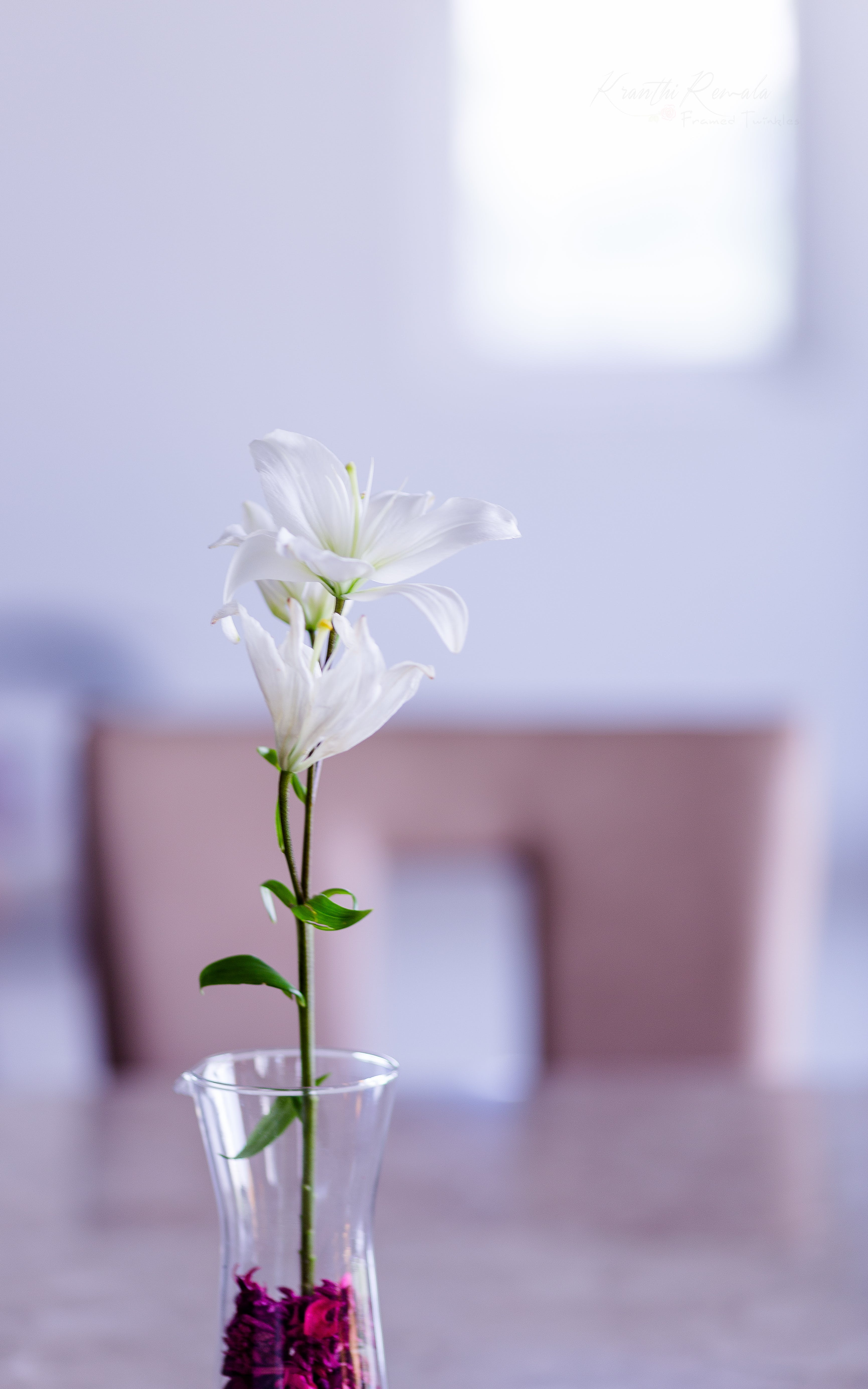Selective Focus Photography of White Petaled Flower in Vase