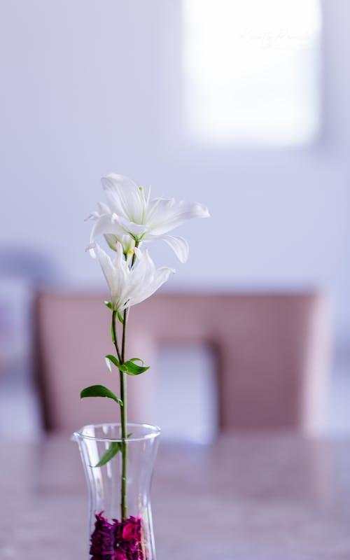 คลังภาพถ่ายฟรี ของ การเจริญเติบโต, กำลังบาน, ดอกไม้, ดอกไม้สีขาว