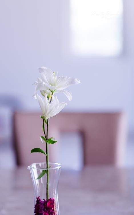 kasvikunta, kasvu, kaunis