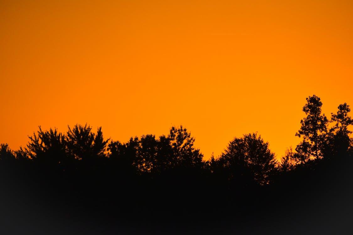 achtergrondlicht, avond, avondzon