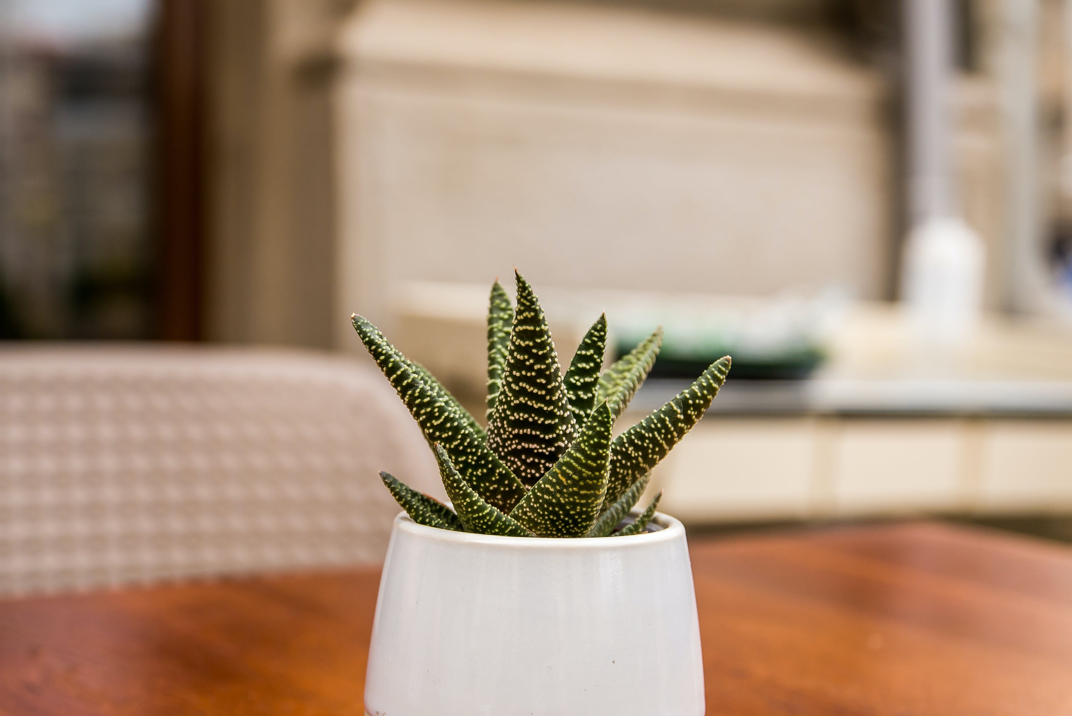 Green Aloe Vera on White Ceramic Vase