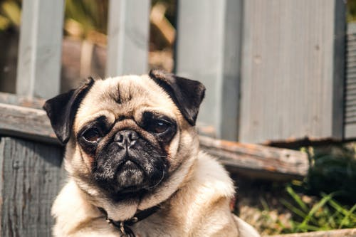 Fotos de stock gratuitas de adorable, amor, animal, blanco