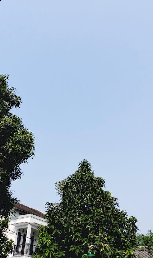 Free stock photo of aesthetics, clear sky, green, sky