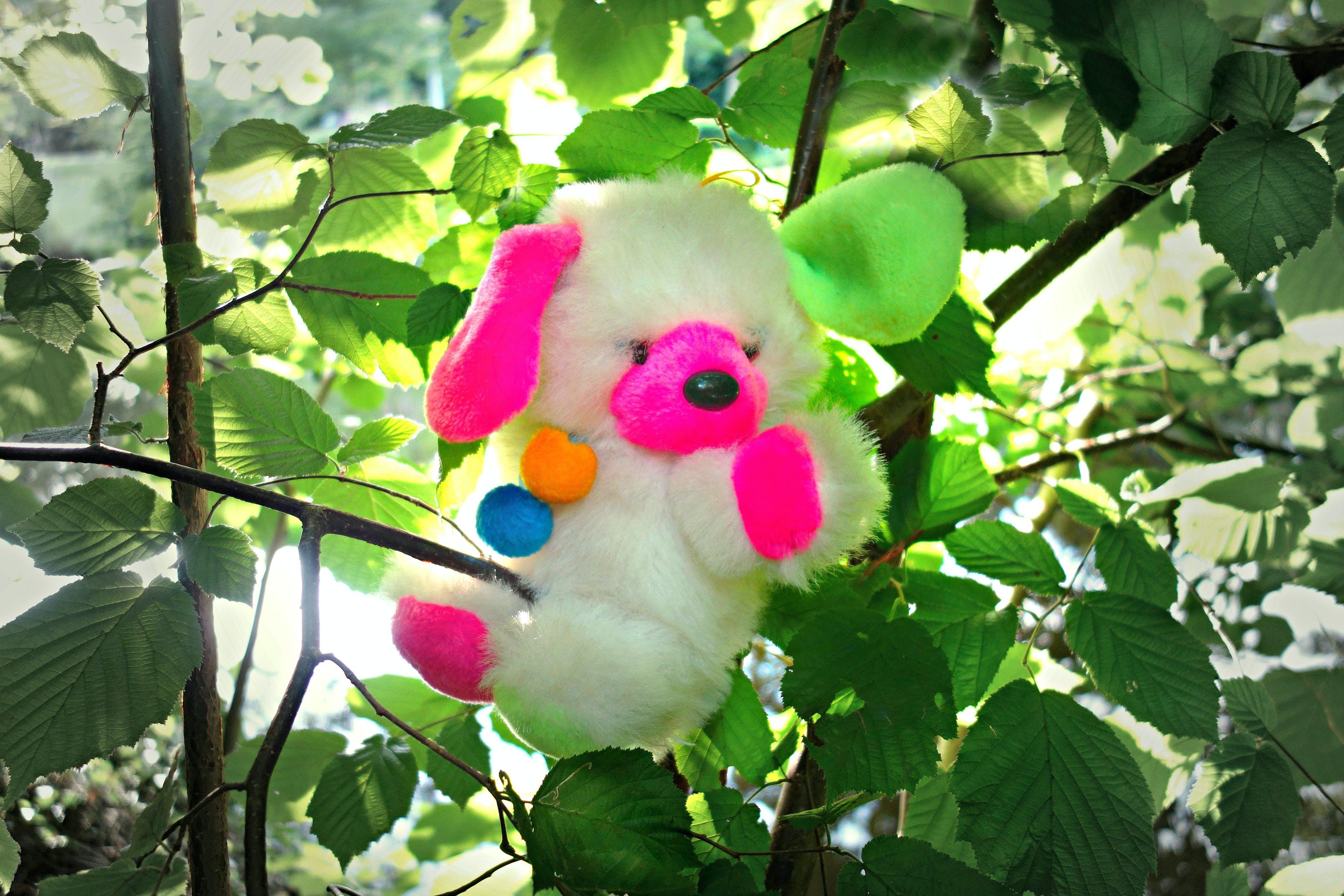 of bear, comfort, cuddly, cuddly toy