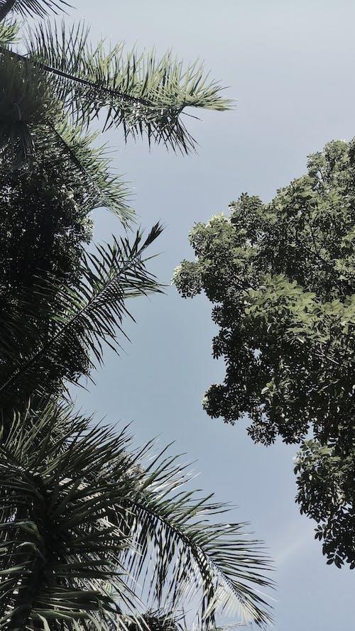 Free stock photo of aesthetics, blue skies, blue sky, clear sky