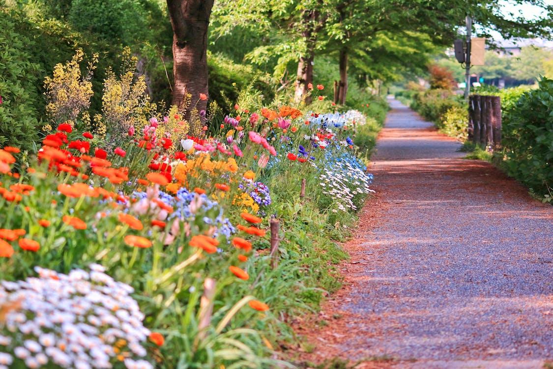 flor de primavera, flors, flors de primavera