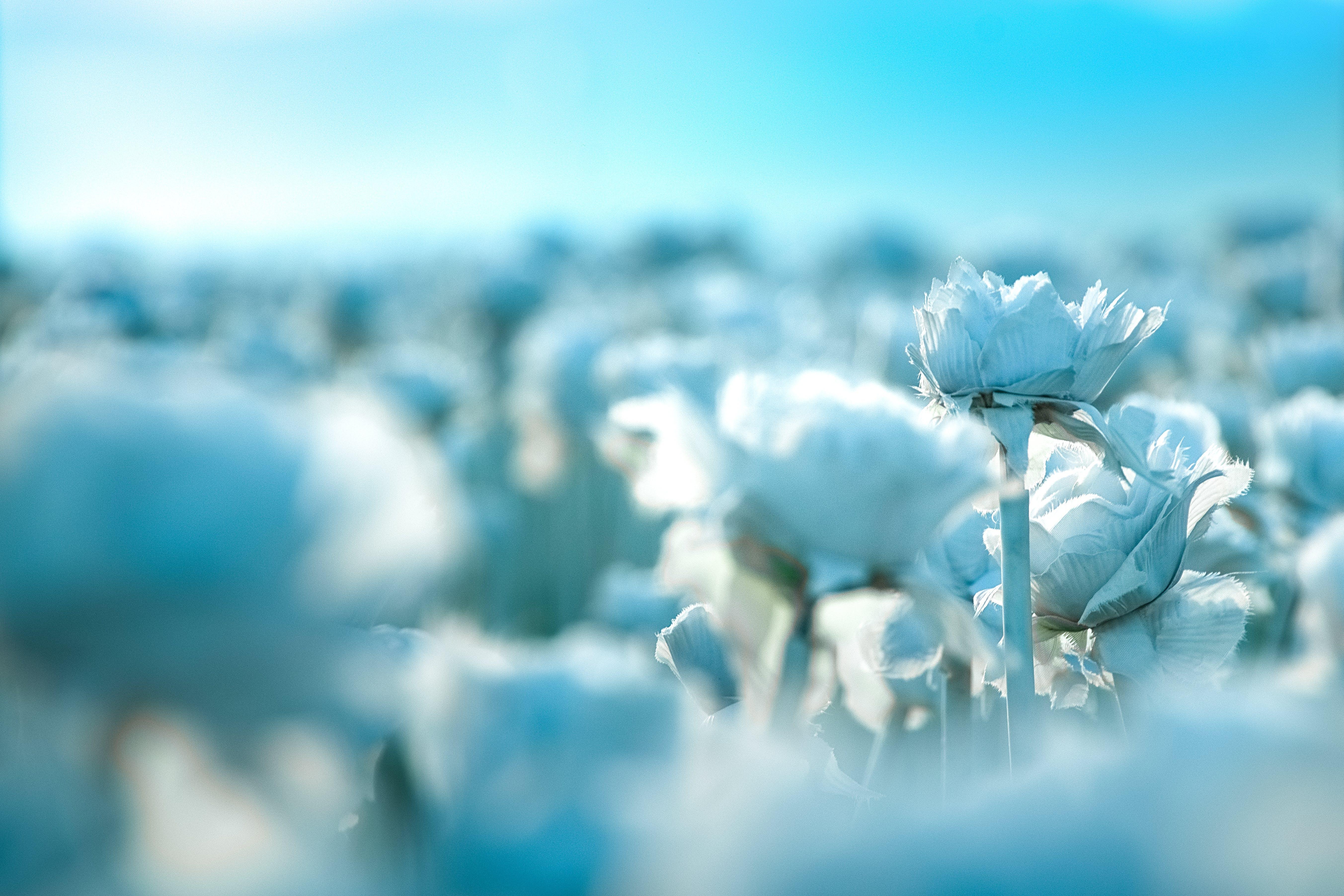Kostenloses Stock Foto zu blumen, flora, fokus, hübsch