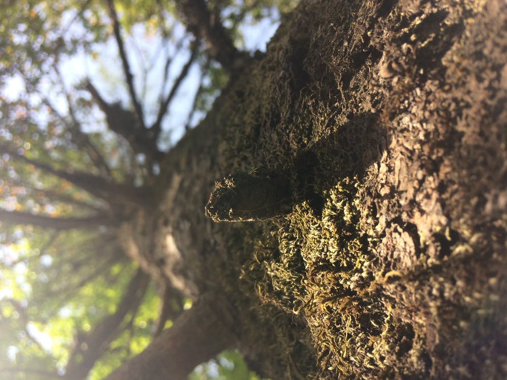 Free stock photo of tree