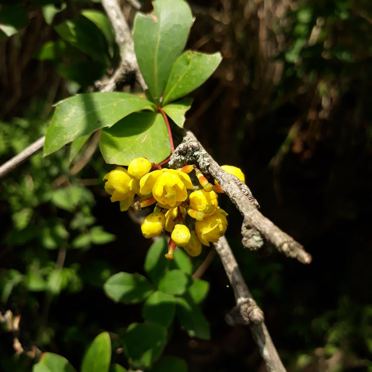 Free stock photo of yellow flower