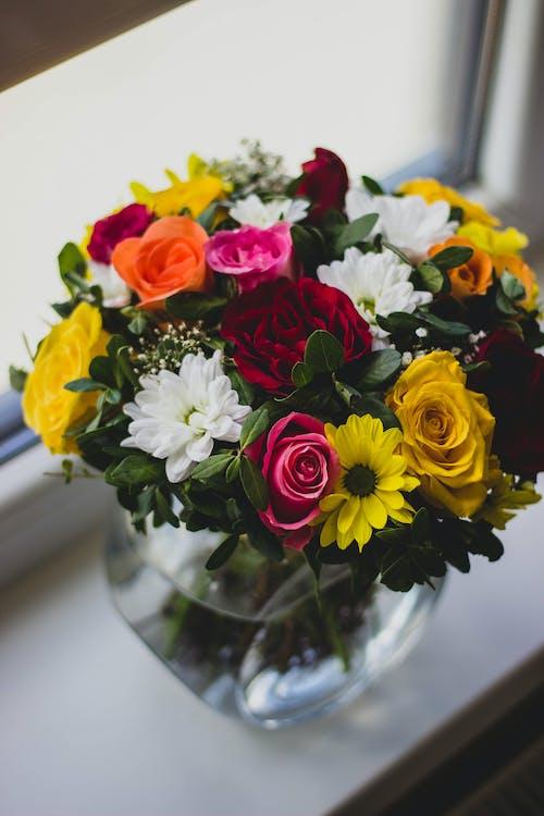 Foto stok gratis bejana, berkembang, bunga-bunga, flora