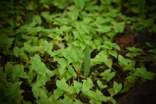 Foto d'estoc gratuïta de fulles verdes, super